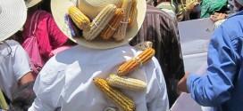 Ley Monsanto